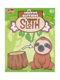 Growing Hatching Sloth